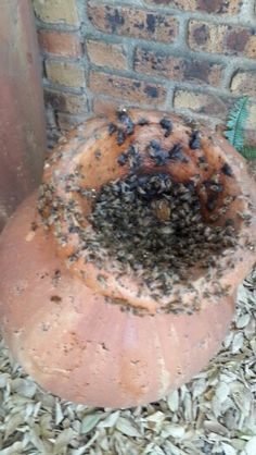 Bee removal in kempton park