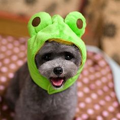 Mkono Dog Cat Pet Christmas Halloween Hat Christmas Party Costume Pet Costume Accessory Frog S >>> To view further for this item, visit the image link.