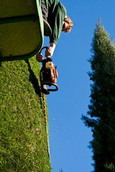 Tuinonderhoud snoeien van coniferen met hoogwerker