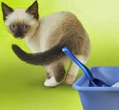 Home Remedies for Cat Diarrhea