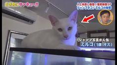 トコトン掘り下げ隊!生き物にサンキュー!!すごくかわいい子猫 #5! 2017年8月18日