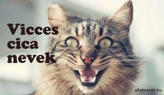 Vicces cica nevek - Állatnevek Sims 4, Cute Puppies, Corgi, Pets, Animals, Animals And Pets, Animales, Animaux, Animal
