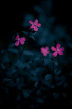 64 ideas garden flower photography macros for 2019 No Rain No Flowers, Little Flowers, Unique Wallpaper, Flower Wallpaper, Simple Face Drawing, Macro Photography, Flower Photography, Dark Backgrounds, Tulips