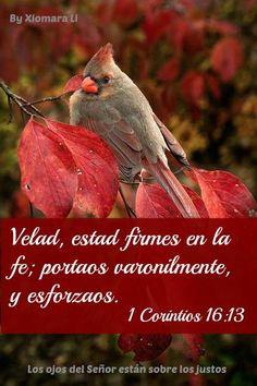Los ojos del Señor están sobre los justos...1 Corintios 16:13