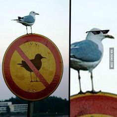 Funny pictures about I Wouldn't Mess With That Bird. Oh, and cool pics about I Wouldn't Mess With That Bird. Also, I Wouldn't Mess With That Bird photos. Funny Animal Jokes, Some Funny Jokes, Crazy Funny Memes, Really Funny Memes, Funny Animal Pictures, Wtf Funny, Animal Memes, Funny Images, Funny Photos