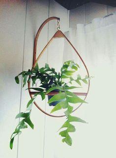 Plant hanger timber