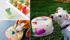 Fabriquez ces super gâteaux-surprises pour amuser et rafraichir votre chien