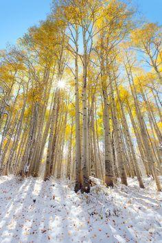 Fall color, McClure Pass, Colorado