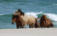 I have always wanted to go and see these island ponies....