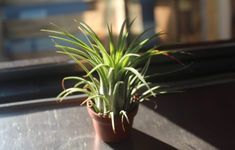 Air plants or Tillandsia are gorgeous waterwise options for Indoor and outdoors! Find out more with Lifestyle Home Garden Types Of Air Plants, Air Plants Care, Plant Care, Dark Purple Flowers, Garden Site, Air Plant Display, Evergreen Forest, Low Maintenance Plants, Water Wise