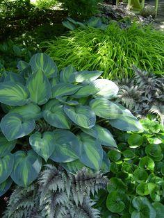 Shade garden basics: Hostas, Painted Ferns, Japanese Forest Grass and Wild Ginger. Japanese Painted Fern, Plants, Woodland Garden, Garden Shrubs, Famous Gardens, Japanese Garden, Outdoor Gardens, Dream Garden, Shade Plants