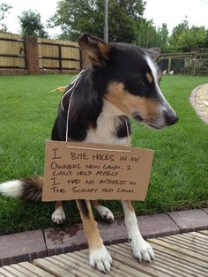 Dog Shaming.  They all look sooo guilty :).  Colleen, you probably could put Abby on here sometime.