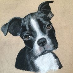 Charcoal drawing pet portrait Boston terrier frenchton