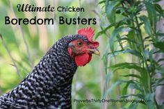 Chicken-Boredom-Busters So true!