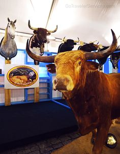 A bullfighting exhibition in Seville, Spain /// Una exposición taurina en Sevilla, España.