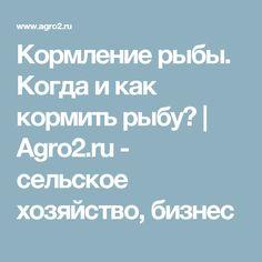 Кормление рыбы. Когда и как кормить рыбу? | Agro2.ru - сельское хозяйство, бизнес