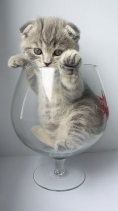 Is that like something in a CUP. Kitten in a glass