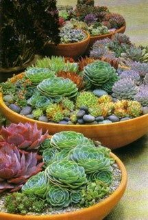succulents - what gorgeous colors and textures~!  Gardening | Succulents