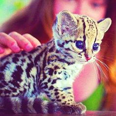 Cutest little kitty ever!