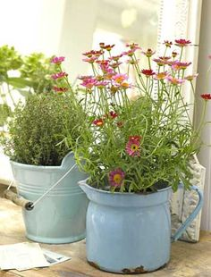 Ceramic buckets and enamel jugs make interesting plant pots, which can have pride of place inside or out.