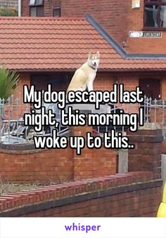 My dog escaped last night, this morning I woke up to this..