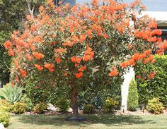 Plant Bed, Baby Orange, Native Plants, Landscape Design, Gardens, Australia, The Row, Landscape Designs, Outdoor Gardens