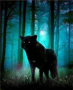 black wolf amongst blues of night and trees