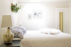 Staghorn Ferns: Plant-astic Green Beauties That Double as Wall Art
