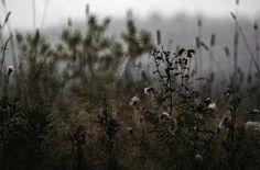➰Offline. (II) #moments #nature