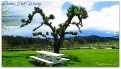 David Hill Winery on my birthday by Gayle Rich-Boxman David Hill, Countryside, Oregon, Golf Courses, Vineyard, Birthday, Beautiful, Vineyard Vines, Birthdays