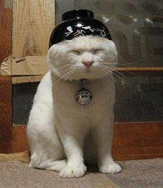 お椀の帽子♪