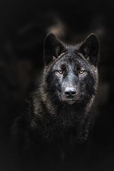 wolf | Tumblr