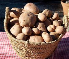 Lecznicze właściwości ziemniaków przepisy