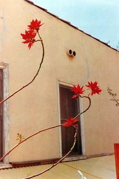 William Eggleston, Flowers 12 chromogenic coupler prints Edition of 15 Published in 1978 by Caldecot Chubb, New York