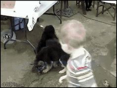 These wild pups are out of control.   17 Most Vicious Puppy Attacks Ever