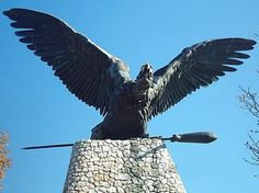 Hungary, Bald Eagle, Bird, Animals, Animales, Animaux, Birds, Animal, Animais
