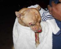 Dog set afire in George County MS dies - Demand Felony Charges!