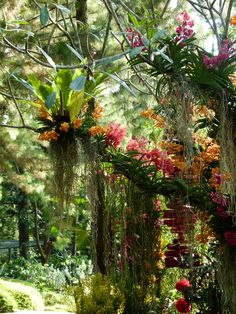Orchid Botanical Garden, Singapore                                                                                                                                                      More