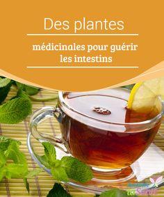 Des plantes #médicinales pour guérir les intestins Mal-être, inflammations, constipation, colon irritable... Les #intestins font partie intégrante de notre #systèmedigestif. #Remèdesnaturels
