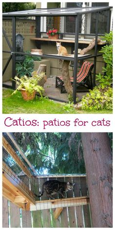 There's a new trend ()since she sheds) for outdoor decorating: catios, a patio for your cat. These enclosed cages let your cats run around outside in your backyard.: