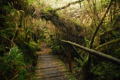 Patagonian jungle by magical-world, via Flickr