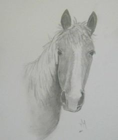 Horse done with graphite pencil by Maryna Moolman