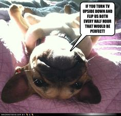 funny dog pictures - Sunbathing