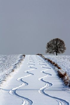 Snow Tracks, Strohgau, Germany      photo via janice