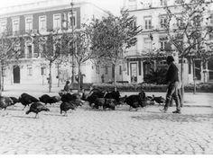 Praça dos Restauradores - Venda de perus no Natal de 1891 BANCADA DIRECTA: http://bancadadirecta.blogspot.pt/2009/10/lisboa-antiga-imagens-muito-muito.html