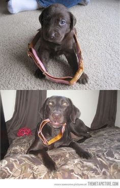 funny-dog-puppy-grown-up-before-after