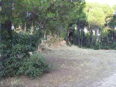 SDC10557, Nature, Pinar Vadohondo, Tinajas, Bodega D.Martín (Villarrobledo, Albacete, España, 7-14 Septiembre, 2013).