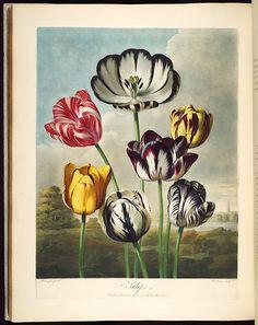 Botanicus Blog