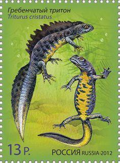 Russian stamp. Northern crested newt, Triturus cristatus