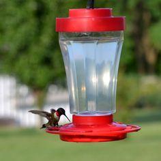 Hummingbird Feed  Hummingbird water